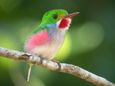 أصغر طائر في العالم - عجائب طيور