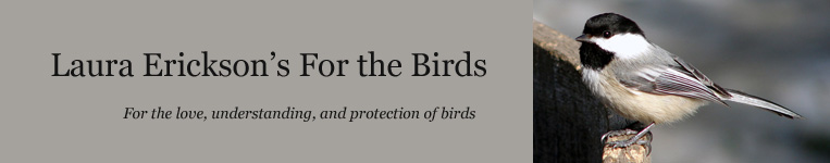 Laura Erickson's For the Birds: For the love, understanding, and protection of birds