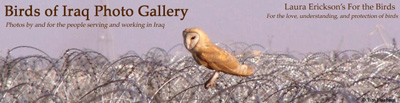 Birds of Iraq Gallery header