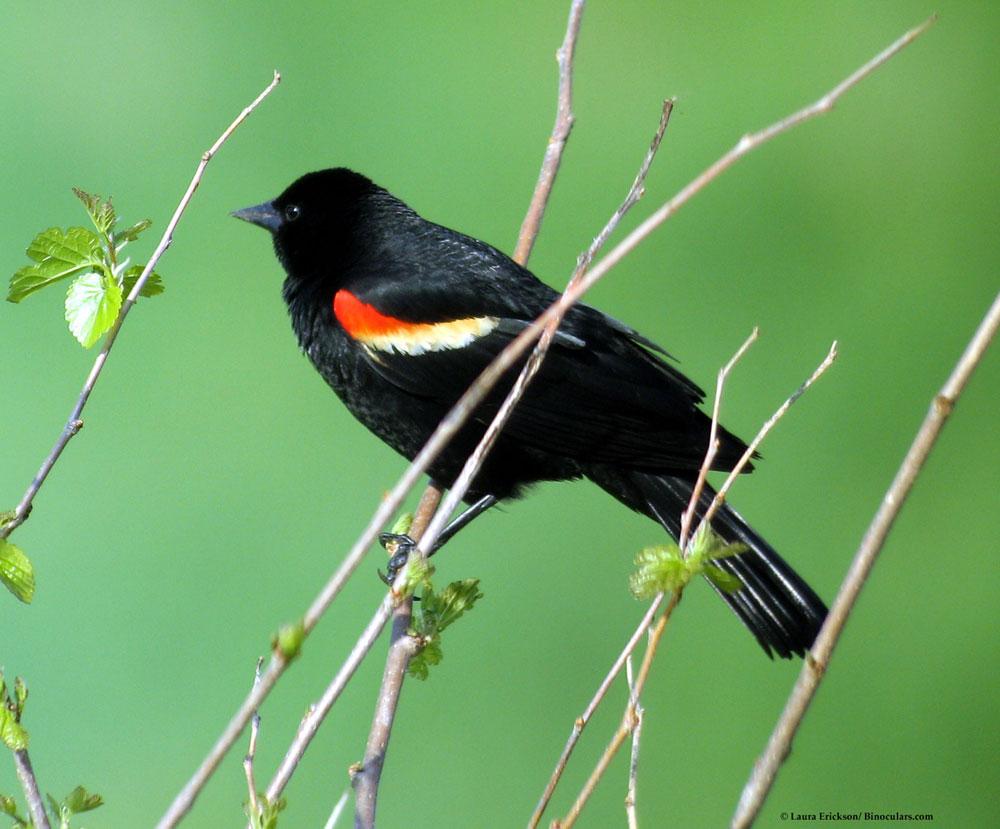 Spring Backyard Birds Flashcards By Proprofs