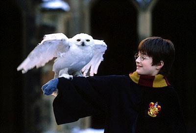 http://www.lauraerickson.com/bird/Species/Owls/HarryPotter/HarryHedwig.jpg