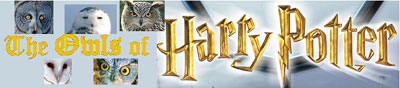 Owls of Harry Potter masthead